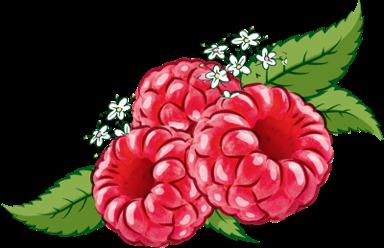Bloomy Framboos