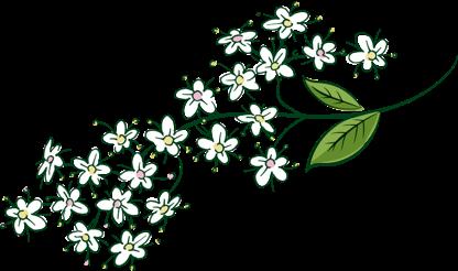 Bloomy Vlierbloesem